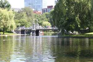 The Public Garden's pond is home to many swans and ducks.