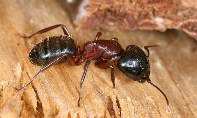 From Yahoo.com: Most of the pests we face around our homes are well known to us: house ants, mosquitoes, and cockroaches.