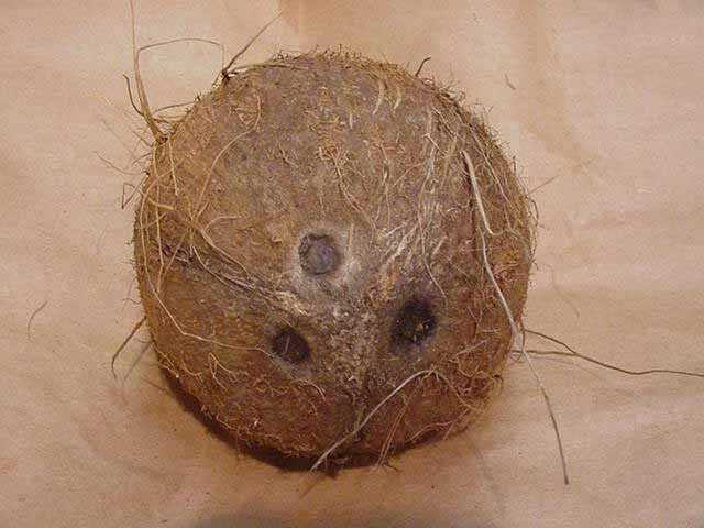 Mood-Boosting Food #11: Coconut