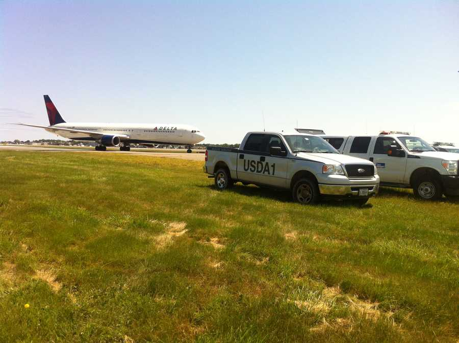 According to the FAA, the number of reported bird strikes at Logan went from 66 in 2007 to 119 in 2010.