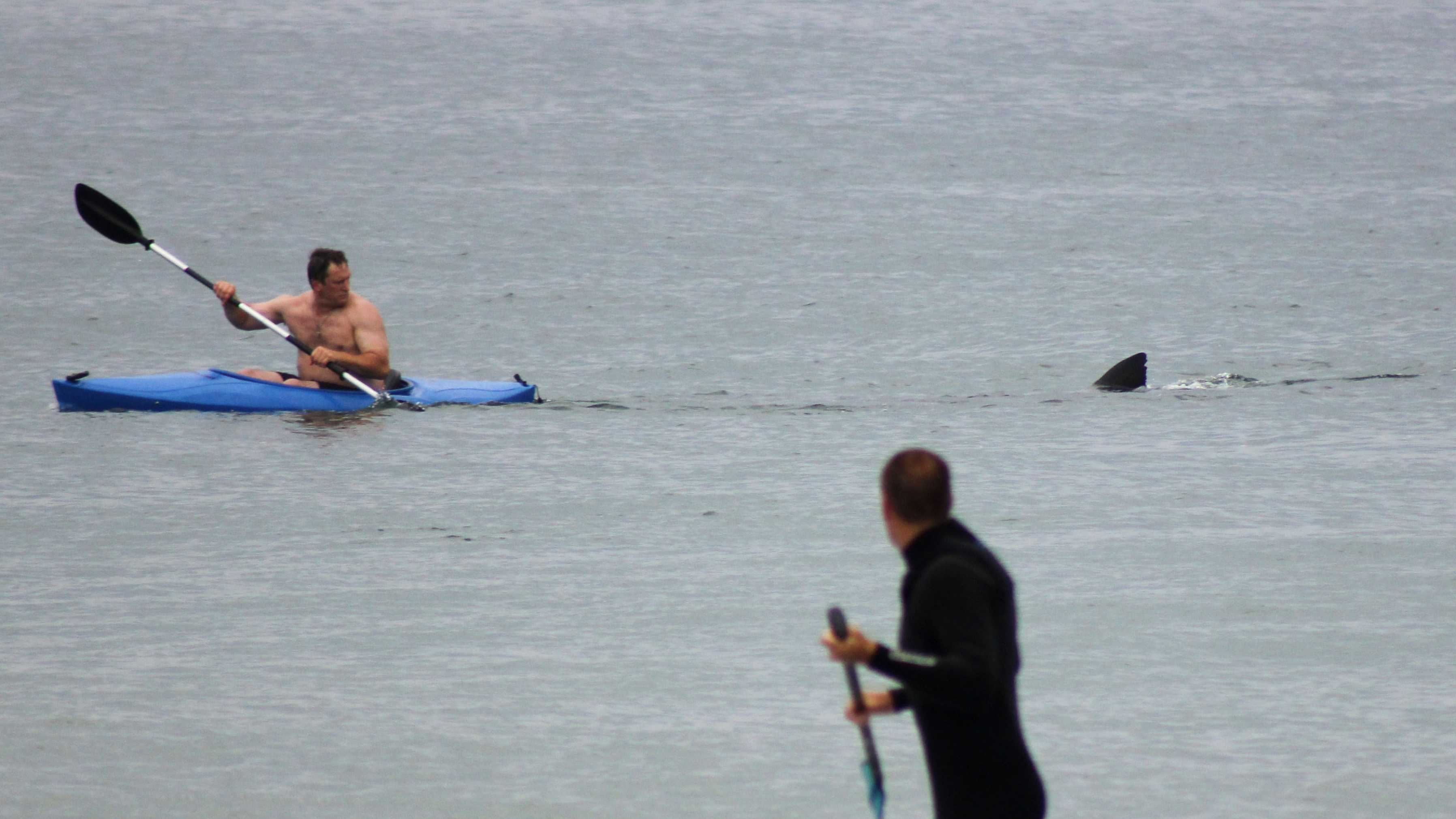 Walter Szulc Jr., in kayak at left, looks back at the dorsal fin of an approaching shark at Nauset Beach.