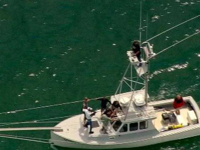 A team tags sharks off the Cape Cod coast on Monday.