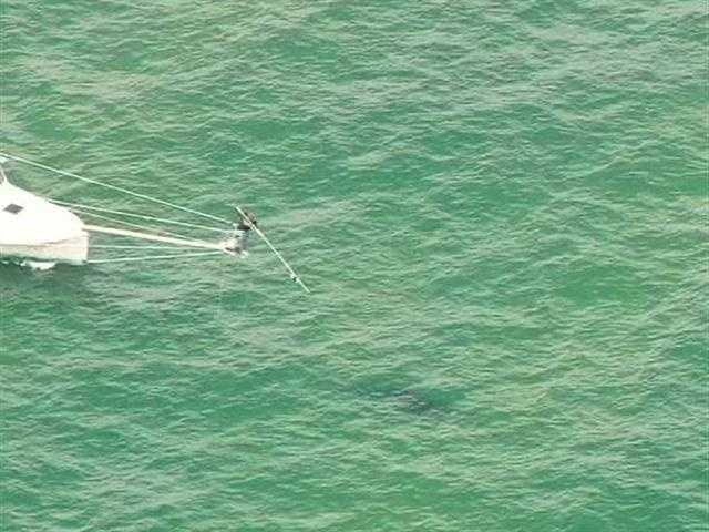 The team spots a shark.