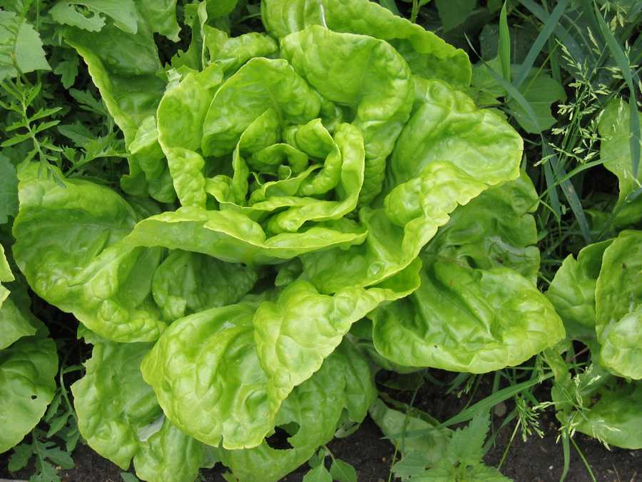 The natural ingredients in whole foods such as romaine lettuce and strawberries help increase cell turnover.