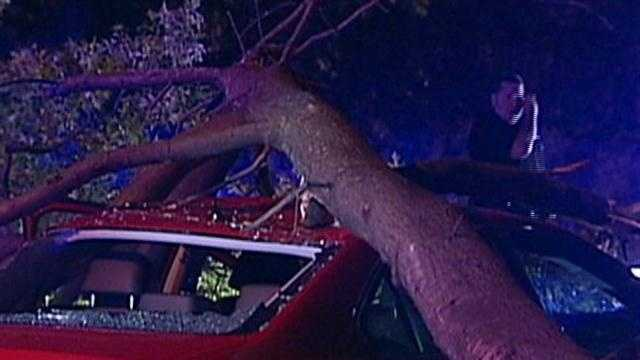 A Worcester woman survived a freak accident when a tree fell onto her car on Route 9 in Brookline.