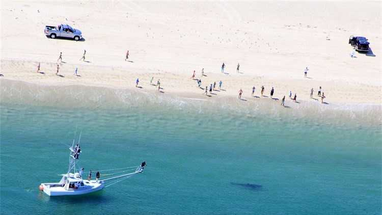 Cape Cod Shark Hunters tagged two white sharks off Nauset Beach on Aug. 30.