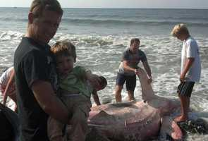 The shark was discovered on South Shore Beach, near Little Compton, R.I.