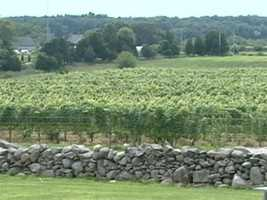 There are only a handful of wine-making regions like this in the world...such as France's Bordeaux region.