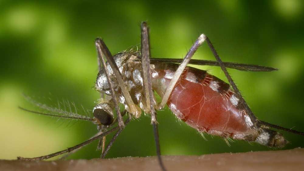 CDC-Mosquito Tight 001
