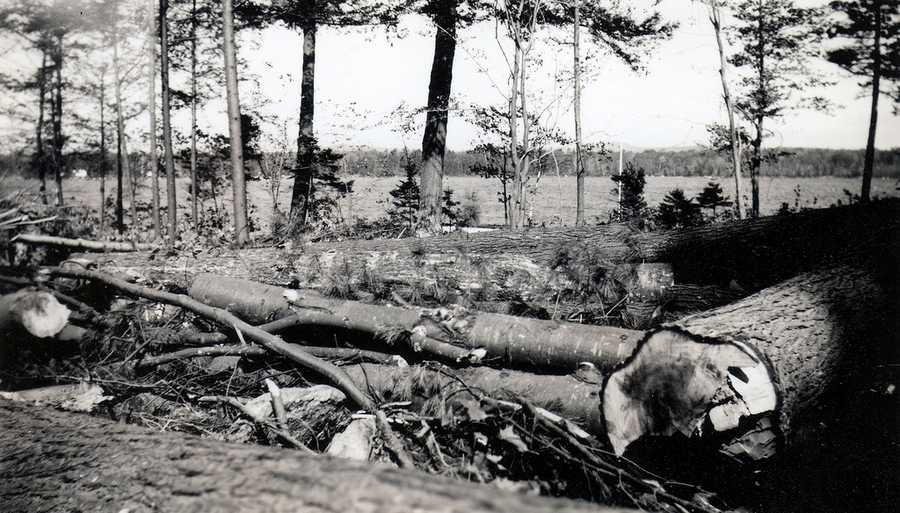 Trees were also knocked down in Wolfeboro, N.H.