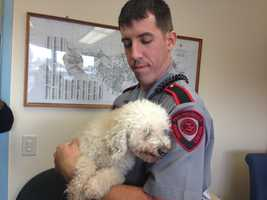 Animal officials are trying to reunite a dog and its owner after the pooch survived an 11-mile ride from Taunton to Providence wedged in the grill of a car. Anyone with information about the owner of the dog is asked to call East Providence Animal Control Center at 401-435-7675 or via email at epacc@hotmail.com