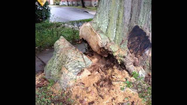 tree burl theft