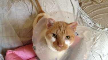 Gumbo the cat