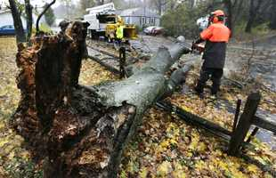 A worker clears a tree dropped by the high winds prior to landfall of Hurricane Sandy in Shrewsbury, Mass.