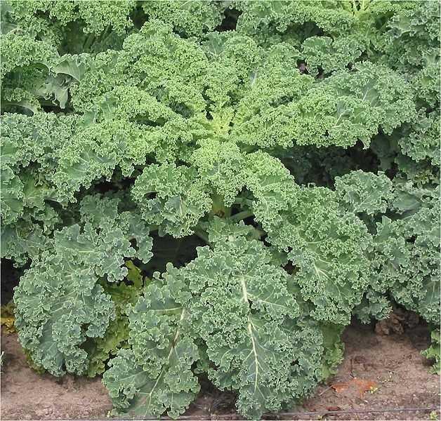 19.) Kale