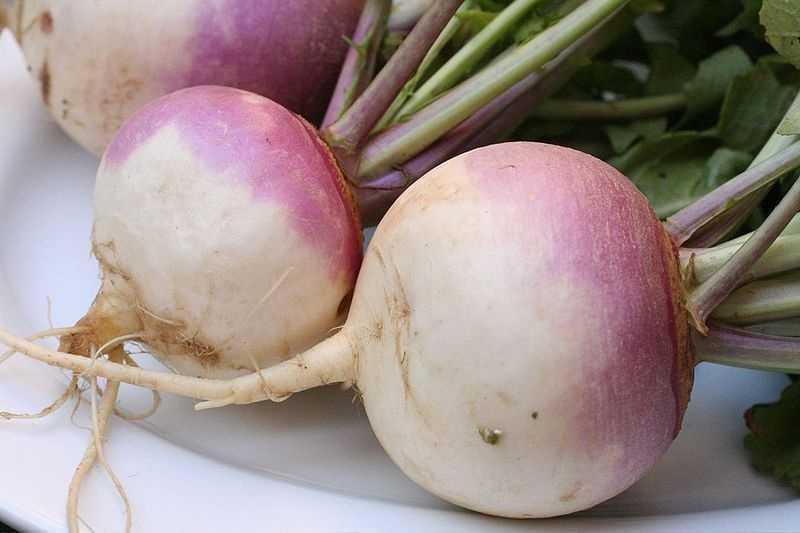 14.) Turnips