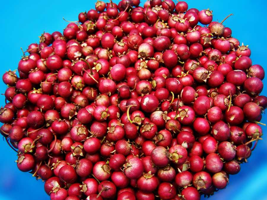 Kennedy encourages her patients at Dana-Farber to eat cranberries all year-round. Cranberries contain benzoic acid, which has been shown to inhibit the growth of lung cancer, colon cancer, and some forms of leukemia.