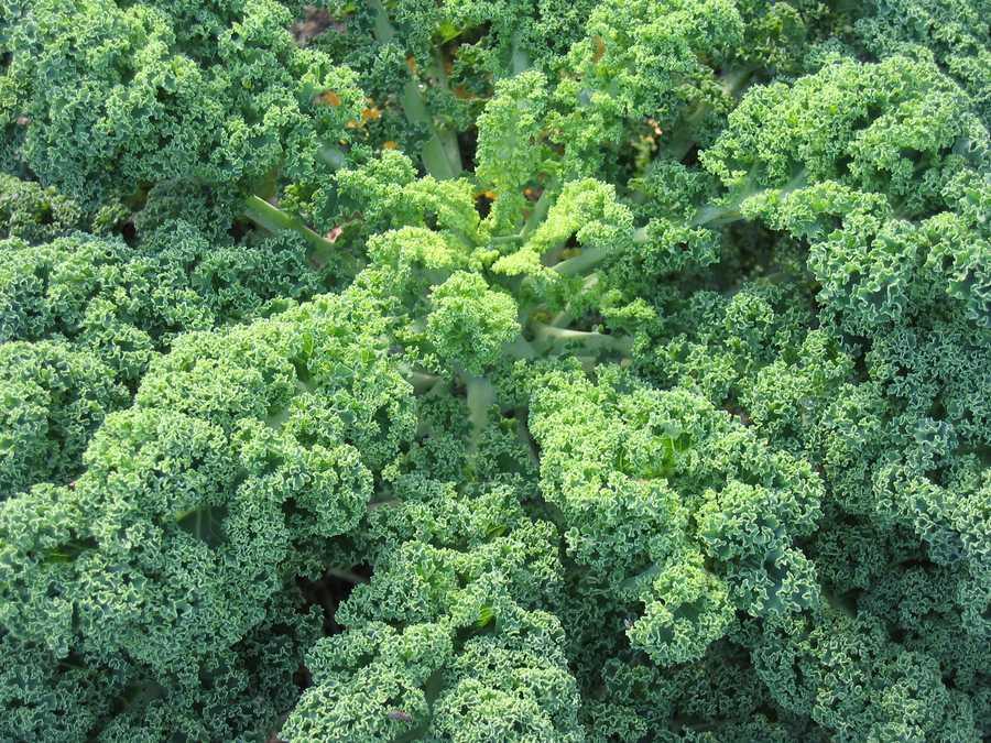"4.""D"" is for dark leafy vegetables"