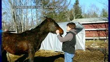 Littleton NH Horse Neglect
