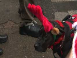 Some pets even took part, dressing up in their holiday best.