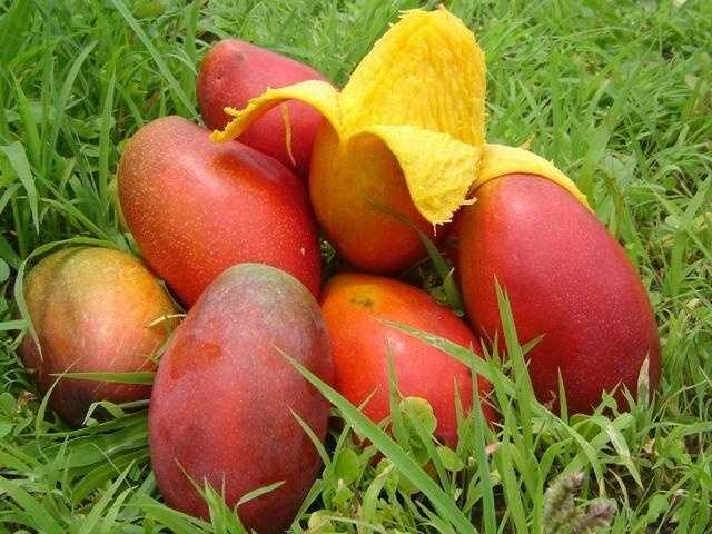 The one food Dorothy can't live without? Mangoes