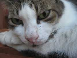 Avoid Feline Tinsel Tragedies and Other Holiday Hiccups