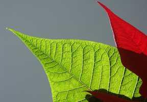 4. Plants