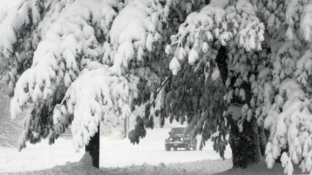 Snow heavy on trees.jpg