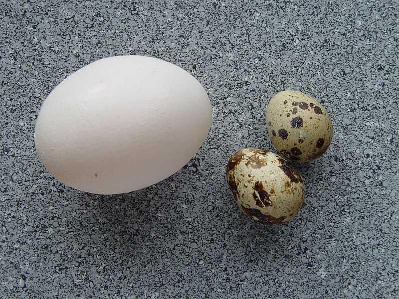 6.) Eggs