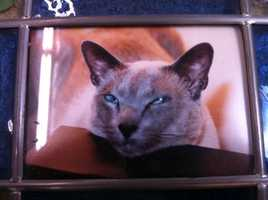 Liz said they had Siamese Cats 'Ming Shi,' 'Tai Ling,' 'Akbarh' and 'Prince Shalimar' (pictured), as well as various other pets including gerbils, goldfish and parakeets.