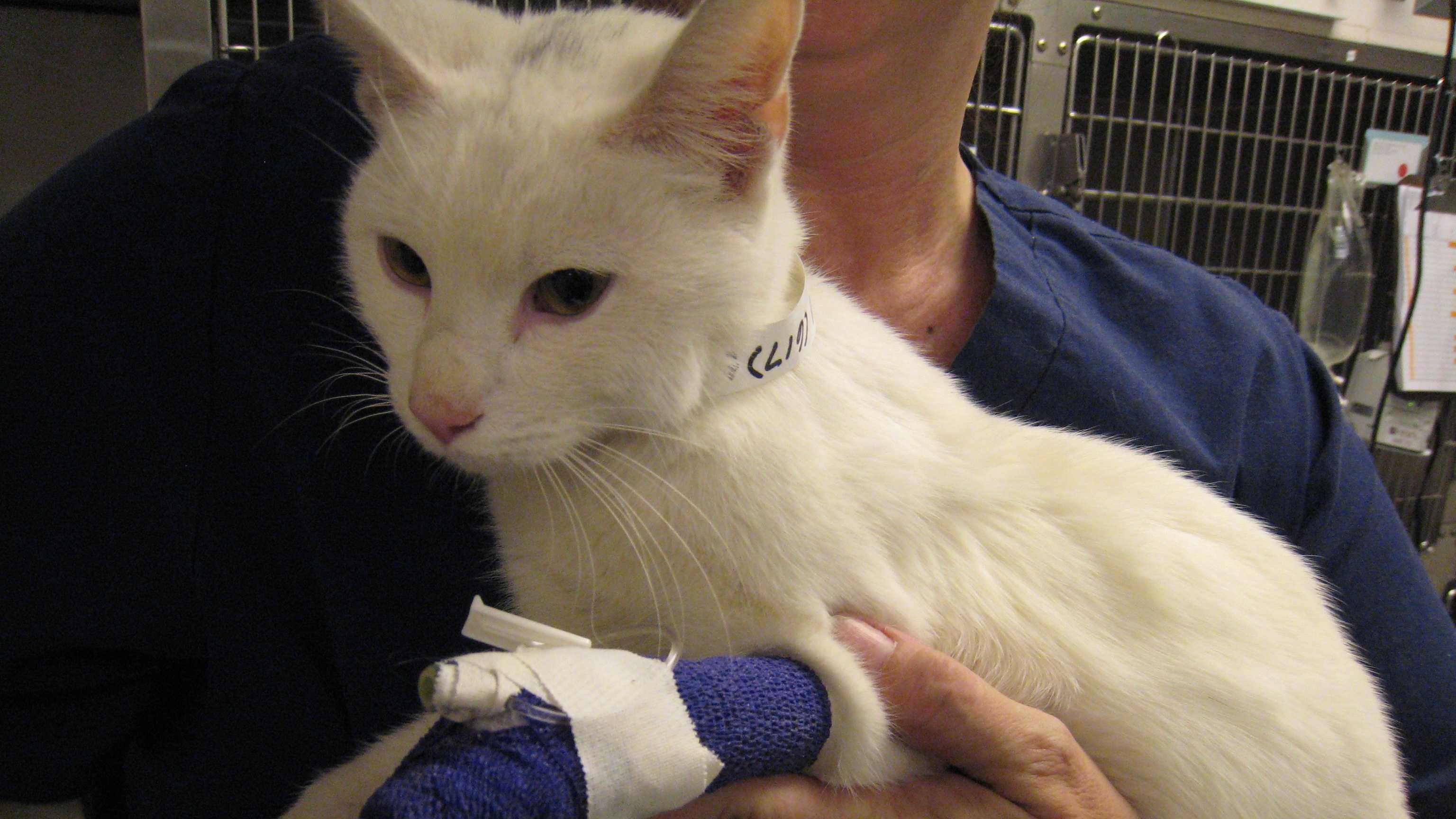 Cat survives deadly cold