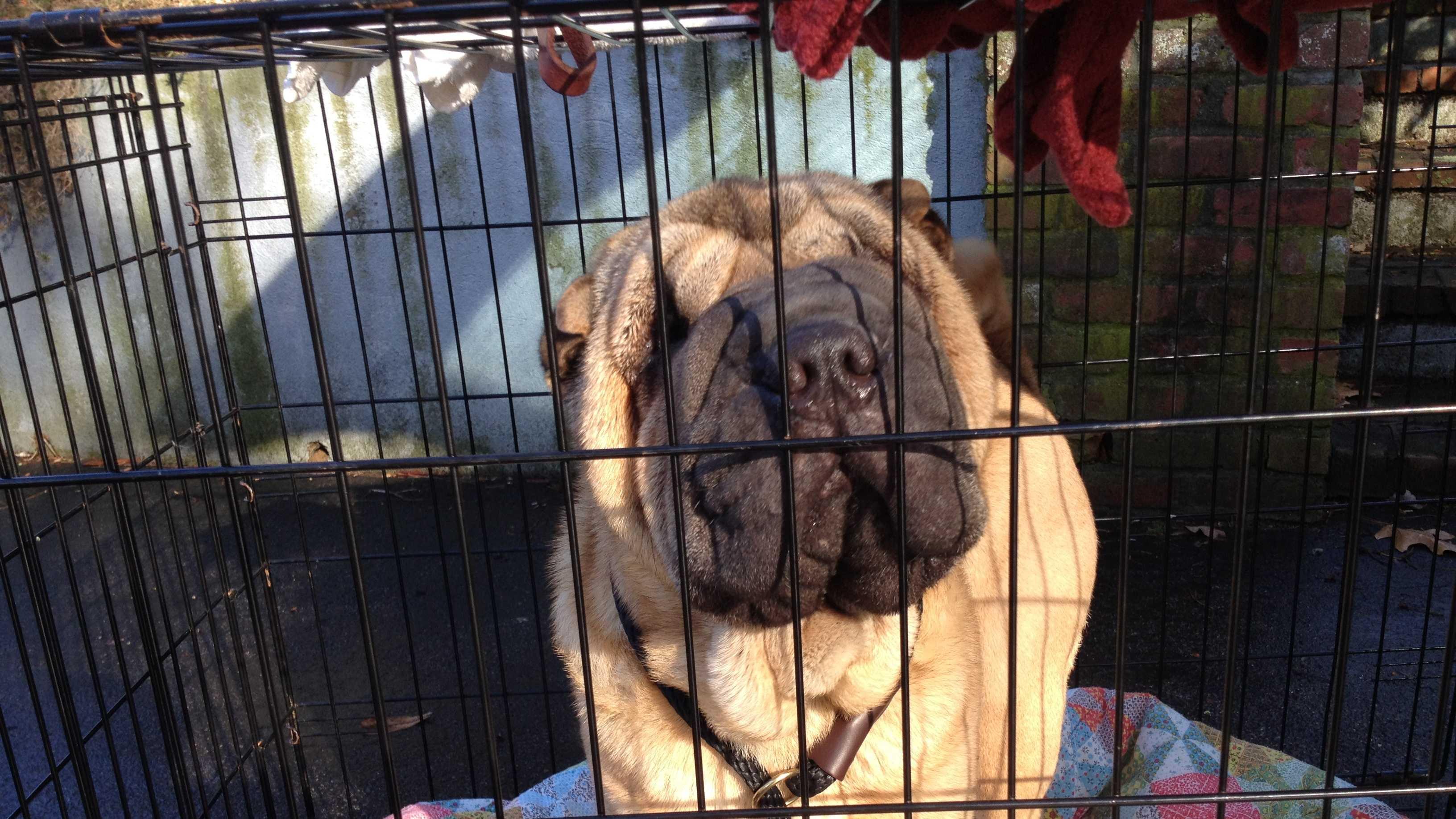 Dog rescued in Braintree