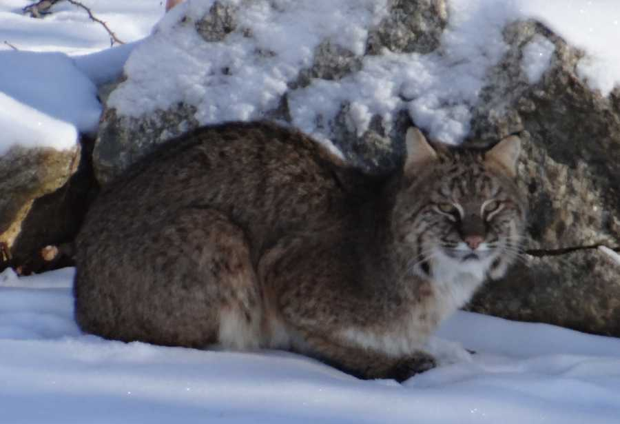 In a Facebook posting, DeMauro said he thought the animal was a neighbor's cat at first glance.