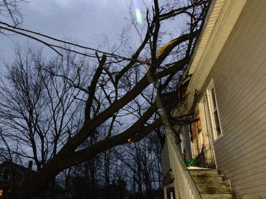 A tree fell on a house in Webster.