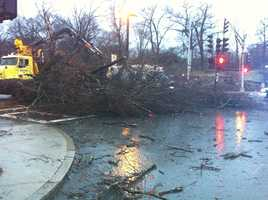 A massive tree falls on Blue Hill Ave.