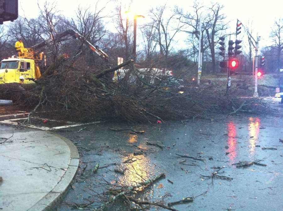 A massive tree falls on Blue Hill Ave.
