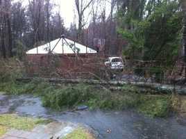 A tree down in Foxborough.