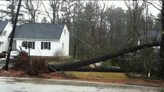 u Local Tree Down