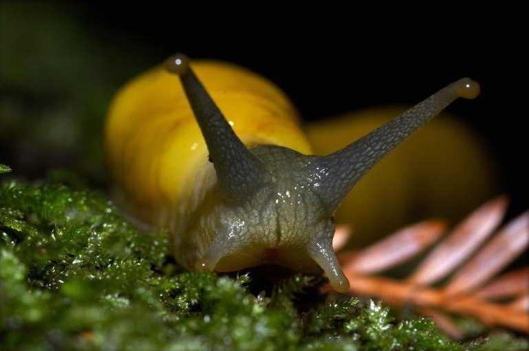 Did you know? Heather says she once KISSED a banana slug!
