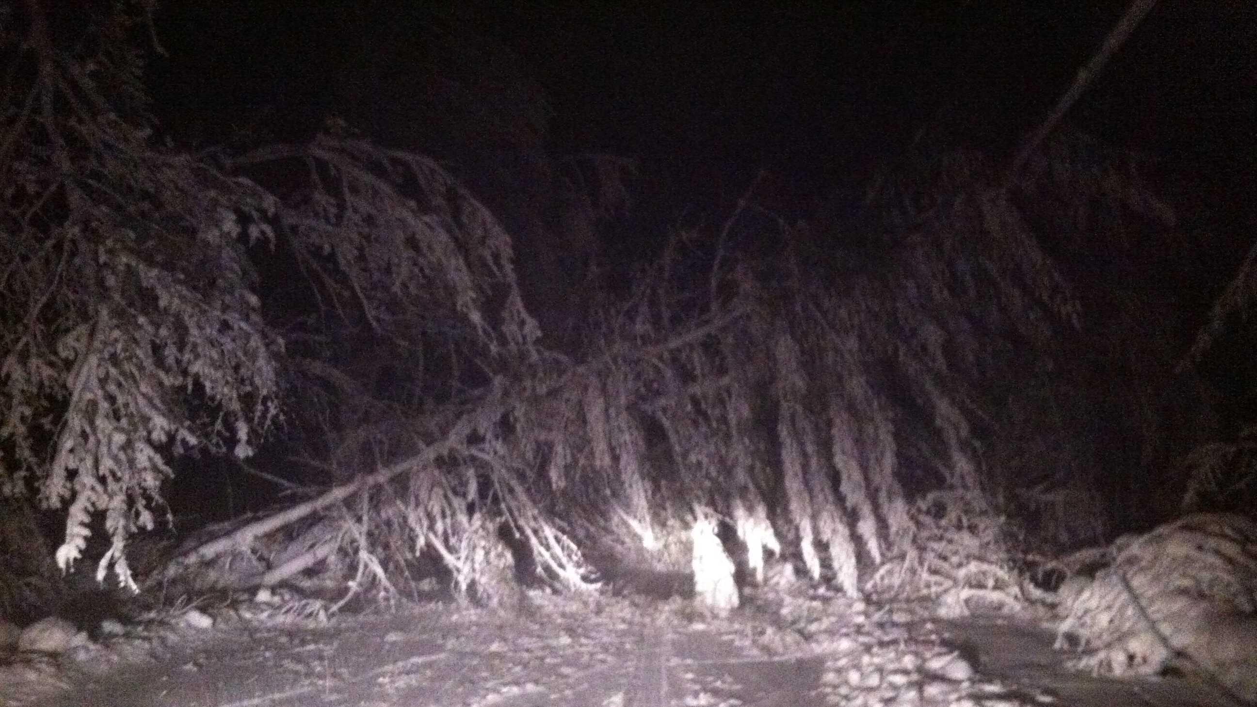 Marshfield Tree Down