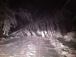 A tree down in Norwell.