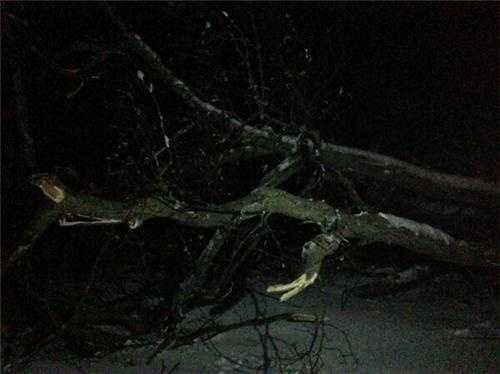 A tree down on wires in Cohasset