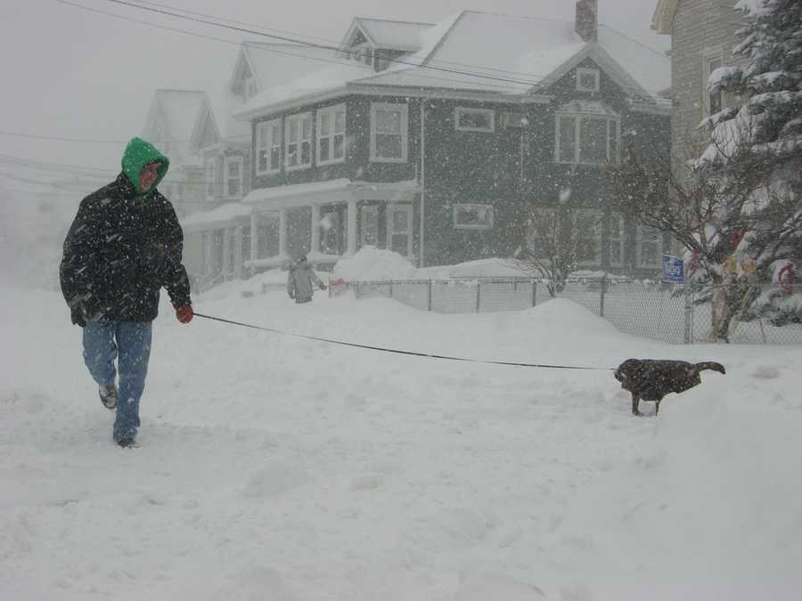 Malden resident Joe Levine enjoys a walk with his dog Saturday morning