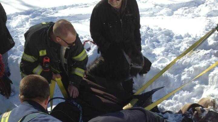 Natick Horse Rescue