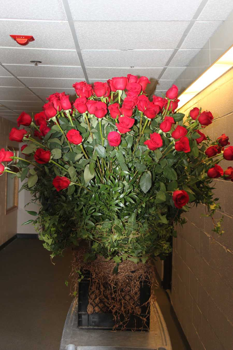 Dorothy Krysiuk's fiance surprised her on Valentine's Day with dozens of roses in one massive bouquet.