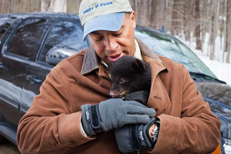 Governor Deval Patrick participated in a black bear cub survey in South Deerfield, Massachusetts.