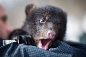 The team discovered two cubs born approximately four to six weeks ago.