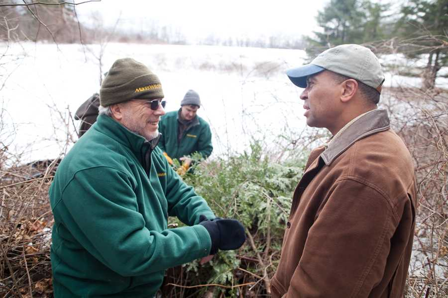 Information gathered at the den in Conway today adds to that compiled through one of longest, continuous studies of black bears in the United States. MassWildlife began the study with the Massachusetts Cooperative Wildlife Research Unit at the University of Massachusetts in Amherst in 1970.