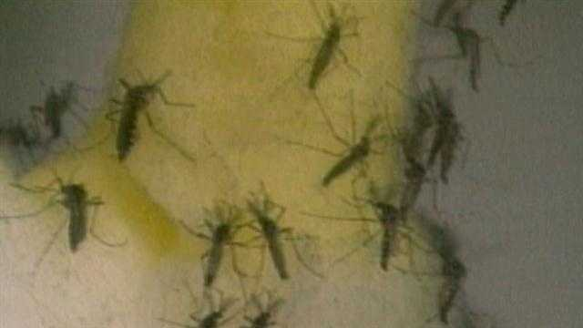 Mosquito population waiting in the wings upon warmer temps