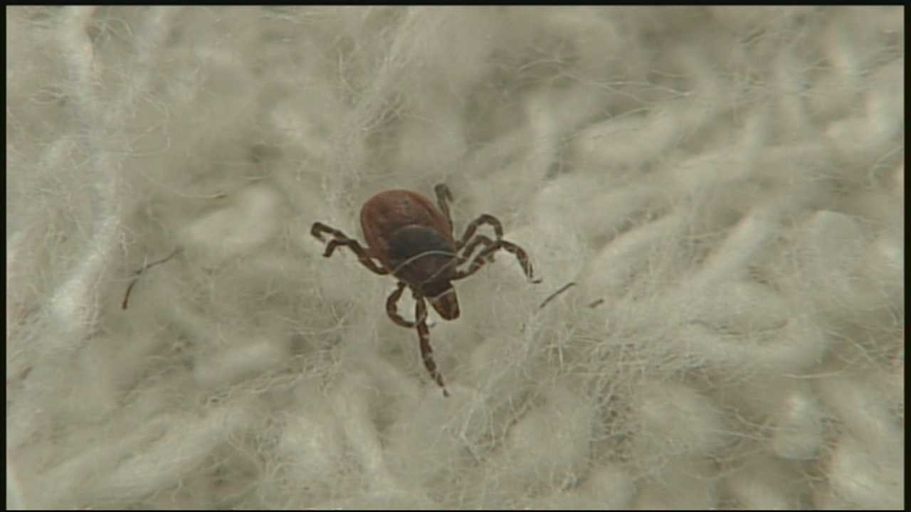 Veterinarians say ticks being spotted on pets
